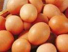 东莞较便宜的鸡蛋货源,**食品厂,个体户,50箱起
