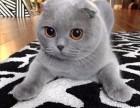 偶然的一次繁殖与猫咪结缘致力为客户带来品质健康猫咪