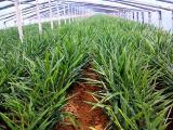 葡萄大棚专用膜 专业的果蔬大棚专用膜提供商,当属一润农膜