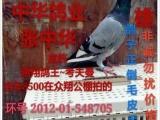 出售成绩鸽 网鸽 种鸽 价格不一 如有需要联系本人