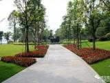 桂阳县专业小区单位园林绿化养护草坪苗木修剪造型