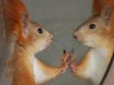 雪地松鼠幼崽1000