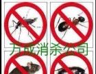 专业灭鼠、灭虫、灭蟑螂,万成消杀服务公