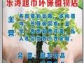 迁安滨河村乐涛超市环保植物店