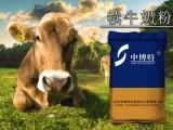 犊牛没奶怎么喂养