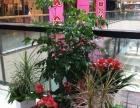 花卉租赁、绿植租摆、绿化养护、会场布置