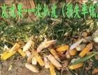小型玉米收割机,秸秆粉碎机(扒皮)