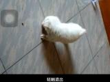 小小宠物狗求卖