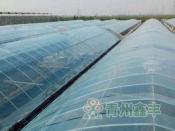 潍坊划算的大棚膜哪里有供应-农用膜批发