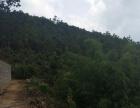 山林200000平米