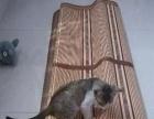 小猫邱好心人收养