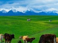 神舟国旅5A级:内蒙古旅游-赤峰、呼伦贝尔草原特价线路,千万不要