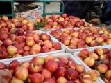 广西126油桃产地在那 山东油桃种植基地\今日大棚油桃价格