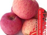 供应陕西苹果水果新鲜,陕西红富士苹果85#苹果特产批发