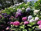 苏州植物租摆 苏州花木租赁 苏州鲜花盆景租赁 园林设计