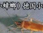 宣城灭鼠公司 灭蟑螂 灭老鼠 灭苍蝇 灭蚊蝇虫害