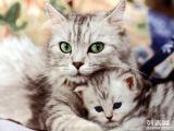 珠市口家庭宠物寄养猫猫狗狗幸福家居陪伴模式可接送
