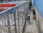 宠物训练狗狗训练学校。湖北武汉金牌宠物训练学校