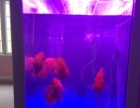 1米2鱼缸带鱼出售