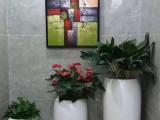 室内绿植租摆 园林绿化养护
