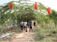 2018年度深圳泥巴园农场多种经典项目玩法为团队出游增光添彩
