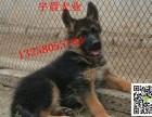 两个月的莱州红犬价格是多少哪里有莱州红幼犬出售