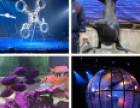 鹤壁出租海狮表演 租赁百鸟展鹦鹉表演 萌宠动物展览
