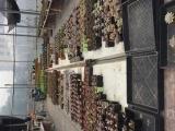 多肉植物大棚帶貨整體轉讓