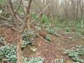 石榴树、石榴树苗、柿子树、山楂树、杏树、枣树、桃树