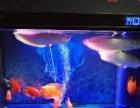 財神鸚鵡魚、銀龍魚