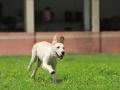 珠海专业宠物狗狗寄养