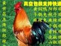 贵阳特色美食黄世昌阳郎辣子鸡、免费送货上门