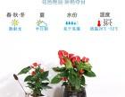 武汉植物销售送货上门,武汉办公室植物批发出租