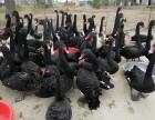 孔雀鸵鸟哪里有鳄鱼苗出售
