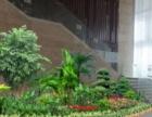 绿植租摆,租花售花,办公室养护,绿植租赁 园林绿化