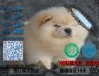 买纯种松狮幼犬 视频看狗 送狗上门-可签订协议