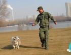 太原摩登宠物训犬培训学校面向全国招生了