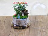 创意花瓶 景观罩情人节礼物 玻璃罩diy工艺品微景观玻璃瓶
