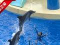 全家暑假港澳三天两晚海洋线全含价480元超值团购价