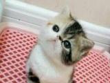 加菲猫2000元