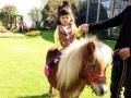 英国设特兰矮马出租上海启欣展览展示有限公司