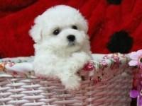 深圳哪里有宠物领养机构深圳宠物免费领养深圳狗狗免费领养