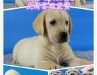 天津宠物领养中心地址 天津出售宠物狗 天津犬舍排行榜