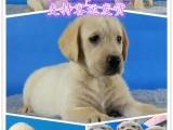 西安宠物领养中心 西安免费赠送宠物 西安哪里有宠物狗卖