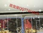 魔王松鼠又来了 价格价低,质量依旧。喜欢的自提客运。