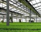 智能温室建设 温室大棚造价 河北丰贸温室设备安装工程有限公司