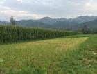 眉县太白山 脚下占地150亩,生态养殖种植场