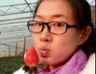 济南草莓张而批发零售