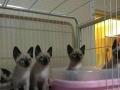 犬猫活体销售、宠物美容、寄养服务等…