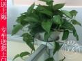 徐家汇静安寺静安区室内办公室盆栽绿植花卉植物租摆租赁绿化养护